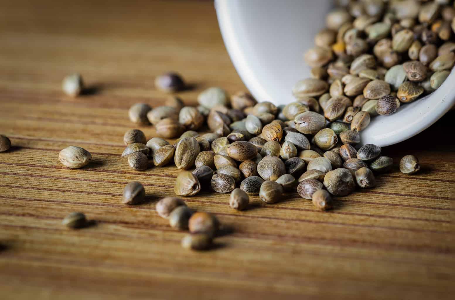 Семена Конопли: в чем их удивительная польза для здоровья?