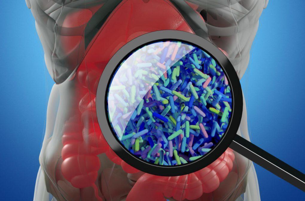 Здоровье кишечника: что такое микробиом и микробиота?