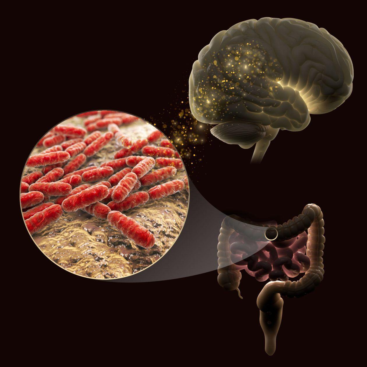 пробиотические штаммы