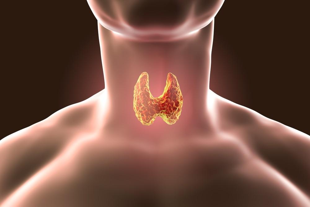 Роль витамина В12 в здоровье щитовидной железы