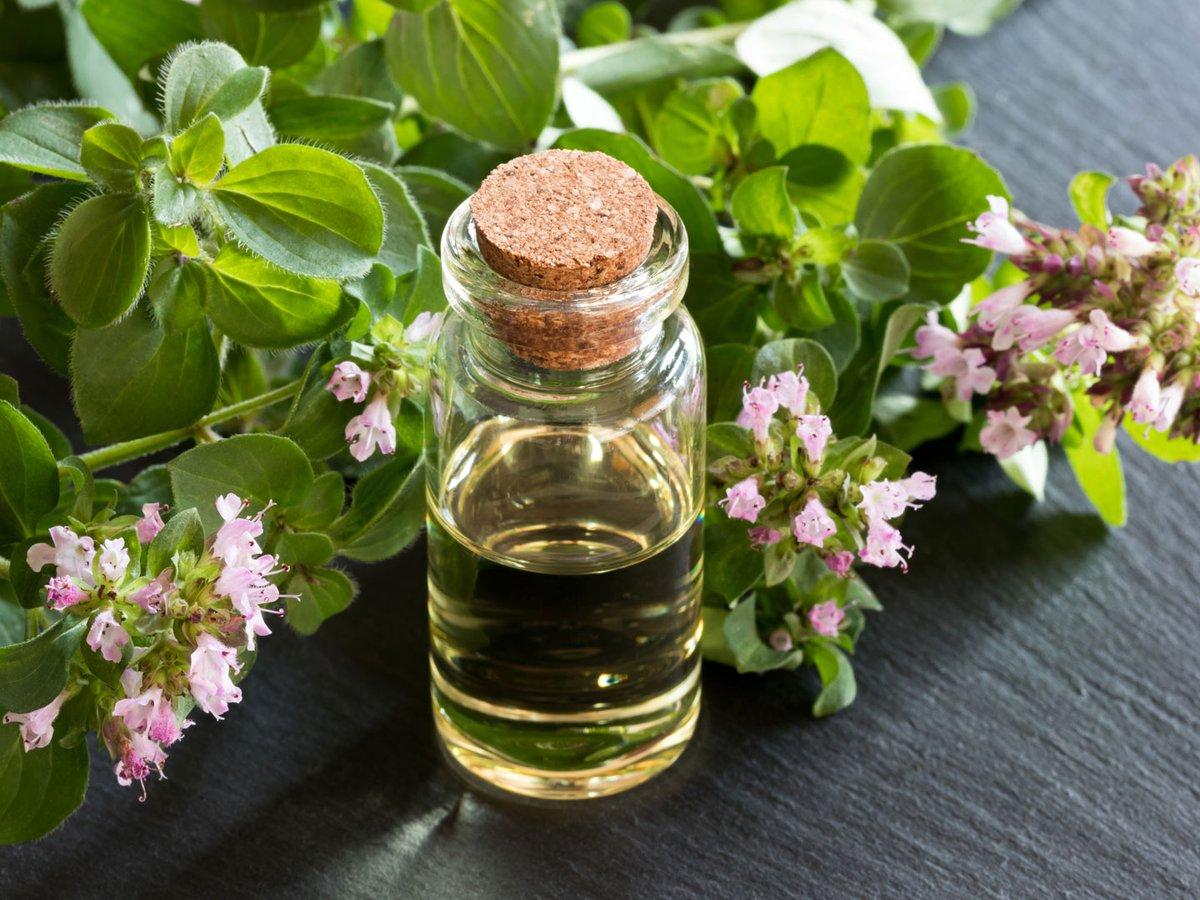 15 полезных свойств и применение масла Орегано для вашего здоровья