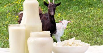 Чем козье молоко лучше коровьего? Список его пользы для здоровья