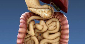 5 советов для поддержания здоровья Пищеварительной Системы