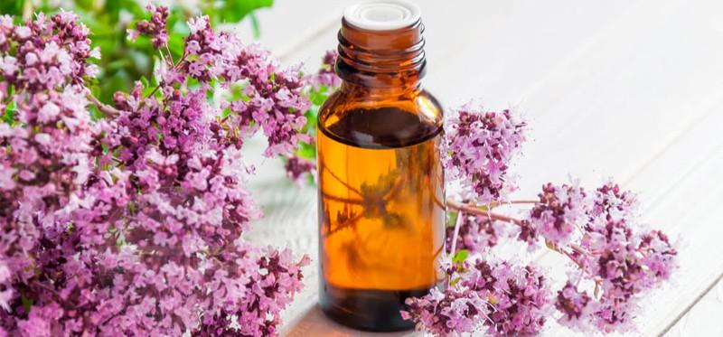 Масло душицы: 8 полезных свойств для применения