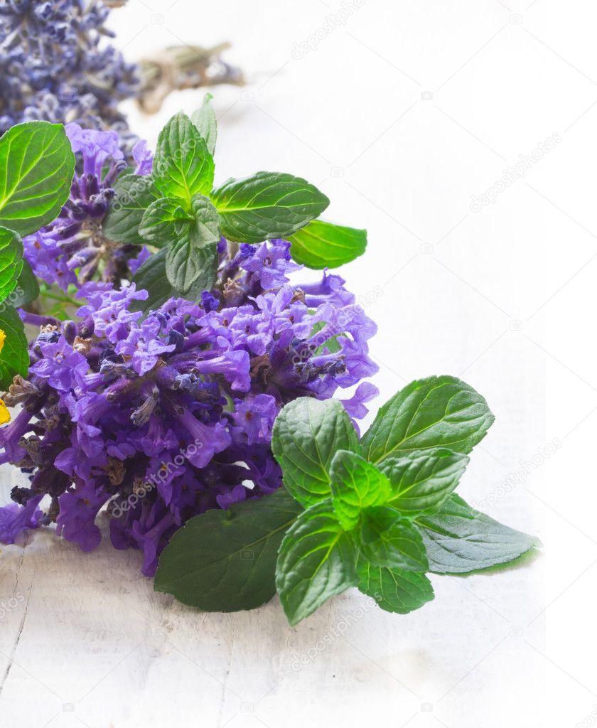 lavenda - Лучшие натуральные средства от депрессии
