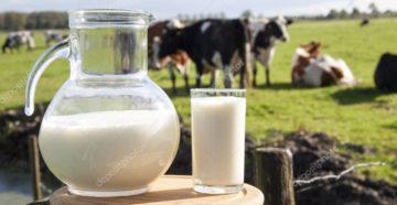 Вред употребления коровьего молока