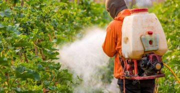 Пестициды и их вред для организма человека