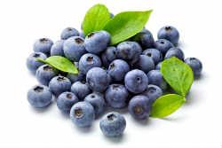 shutterstock bluberries - 7 ягод, которые вы должны есть каждый день