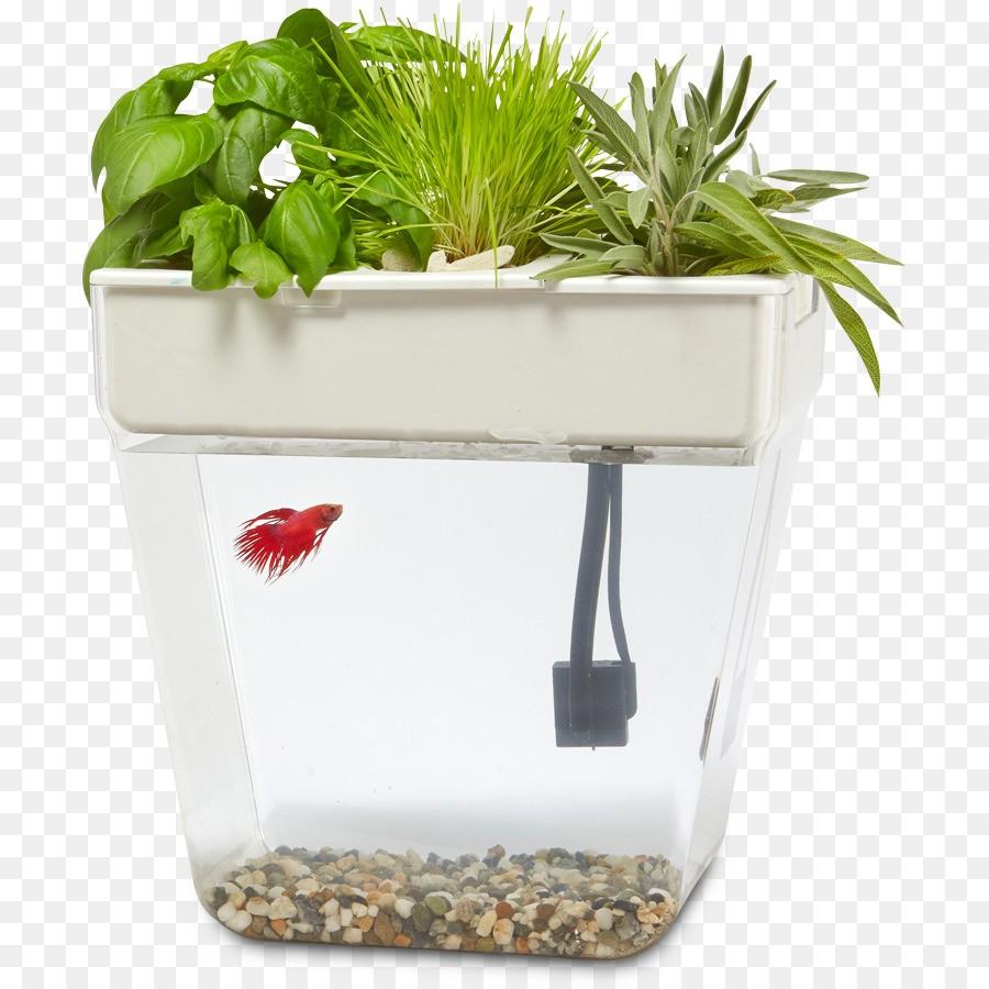 Аквапоника: выращиваем полезные растения дома
