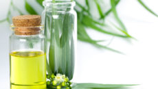 Эвкалиптовое масло: главные лечебные свойства и рецепты
