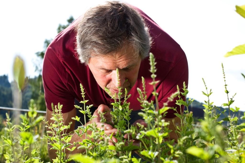 Лучшие травы для андропаузы