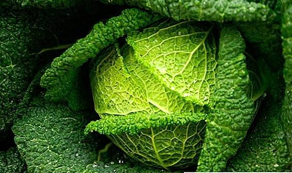 Савойская капуста-супер овощи с большим количеством витаминов